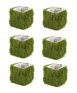 Square Cube Moss Pot - Set of Six