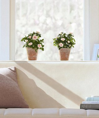 Pink Potted Roses Window Decal